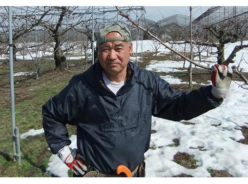 さくらんぼ(佐藤錦)の生産者 野口國夫さん